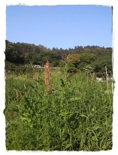 鎌倉の自然農の畑イベント